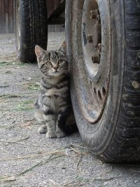 Opony i kot